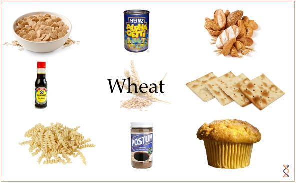 2013-08-27-Wheat21