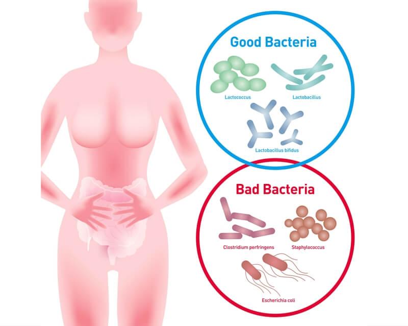 Stress affects gut bacteria