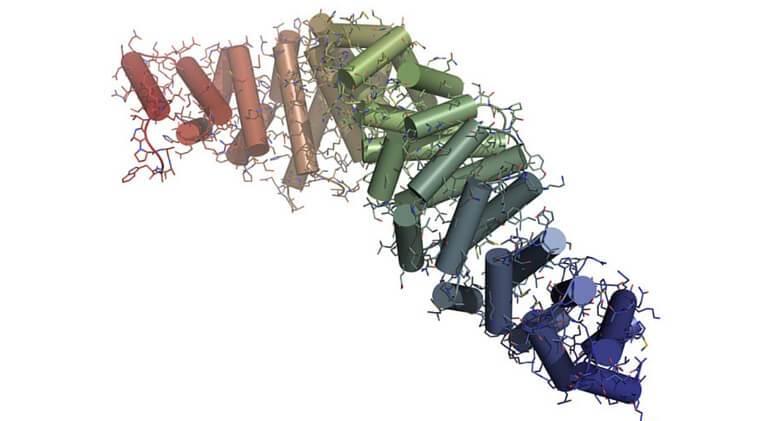 Wnt gene